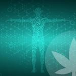 Cos'è La Carenza Clinica di Endocannabinoidi?