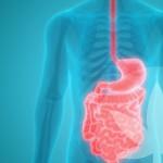 In Che Modo Il CBD Potrebbe Favorire Digestione e Salute Intestinale?